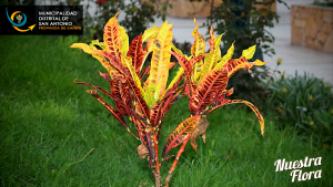 Nuestra Flora